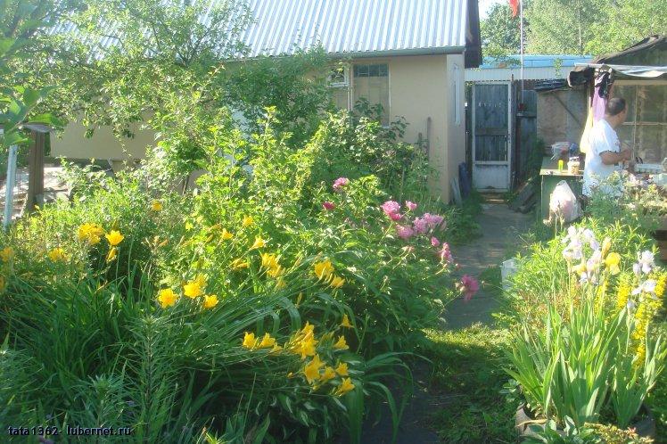 Мой любимый огород фото