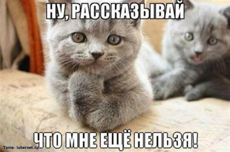 Фотография: 531672_491720780875726_822076701_n.jpg, пользователя: Тania