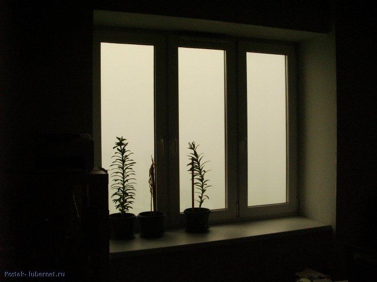 Фотография: Домов за окном не видно., пользователя: Kostak