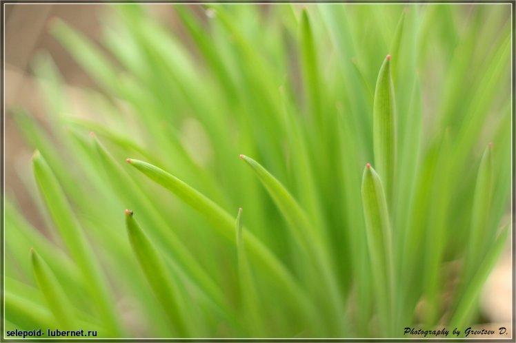Фотография: Зелень, пользователя: selepoid