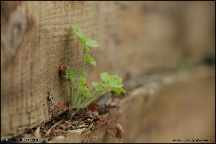 Фотография: Росток, пользователя: selepoid