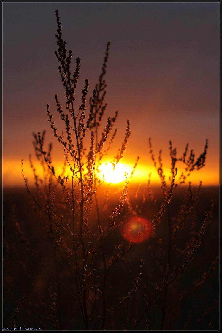 Фотография: Закат, пользователя: selepoid