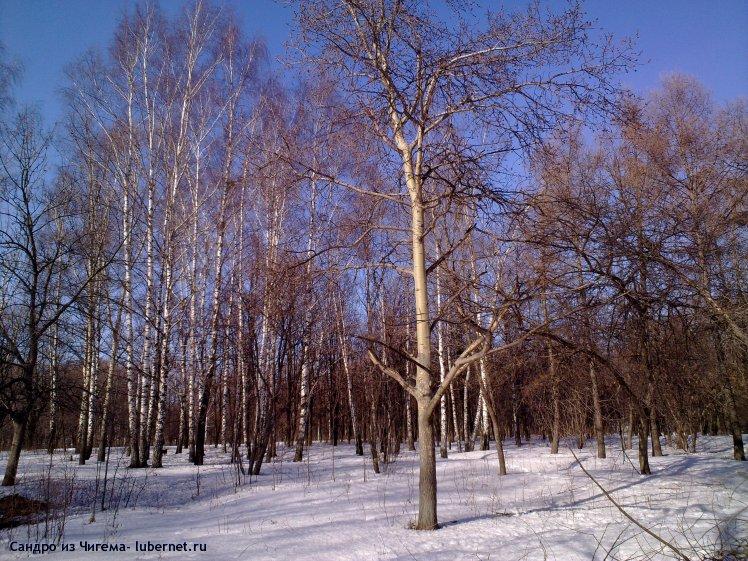 Фотография: Участок парка Наташинские пруды планирующийся под застройку (фото6).jpg, пользователя: Иван Васильевич
