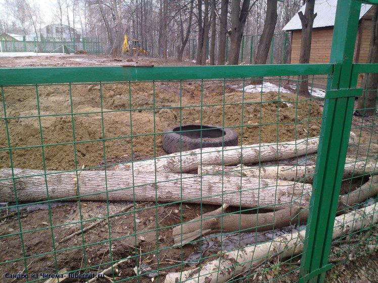 Фотография: Работы по сооружению спортивной площадки в Наташинском парке - вырубка деревьев.jpg, пользователя: В@сильичЪ