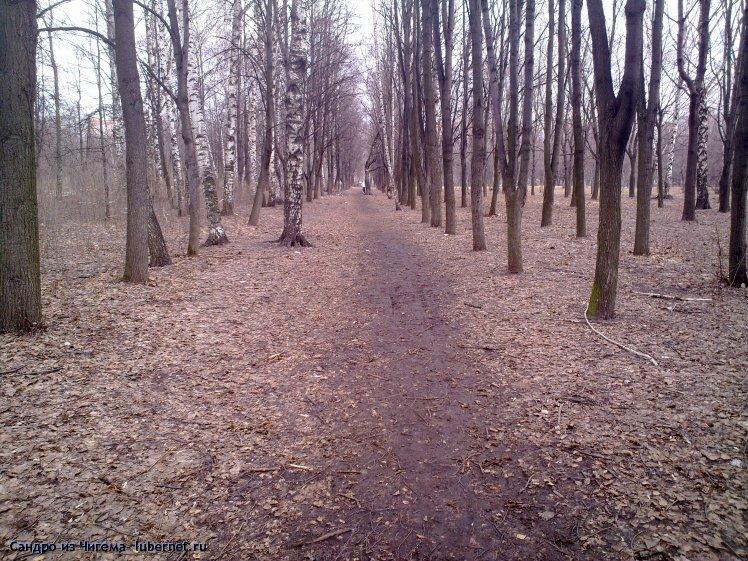 Фотография: Наташинский парк.Весенняя аллея (примечание для гл. архитектора Люберец-совсем не похоже на самосев ).jpg, пользователя: В@cильичЪ