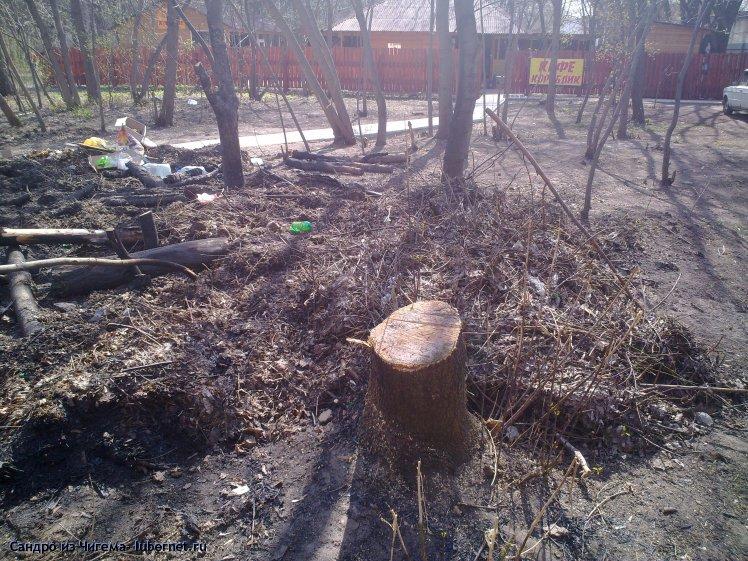 Фотография: Вырубленные деревья в парке Наташинские пруды (фото1 - у кафе Кораблик).jpg, пользователя: Сандро из Чигема