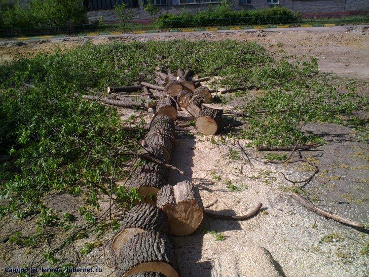 Фотография: Вырубленные деревья на улице Толстого - у дома №31 (фото2).jpg, пользователя: В@сильичЪ