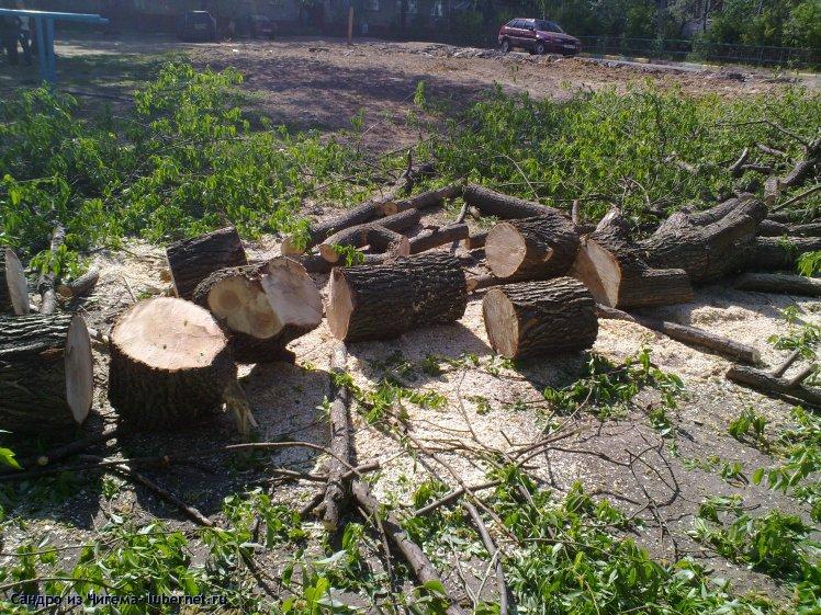 Фотография: Вырубленные деревья на улице Толстого - у дома №31 (фото3).jpg, пользователя: Иван Васильевич