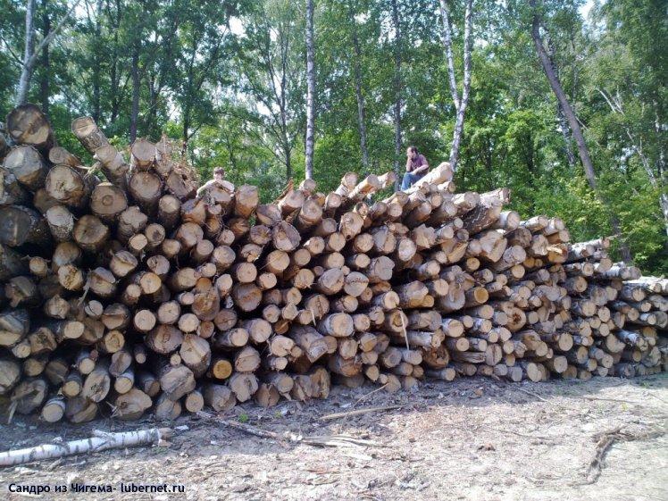 Фотография: лес - наше богатство (сны чиновников Люберецкой администрации о Наташинском парке).jpg, пользователя: Сандро из Чигема