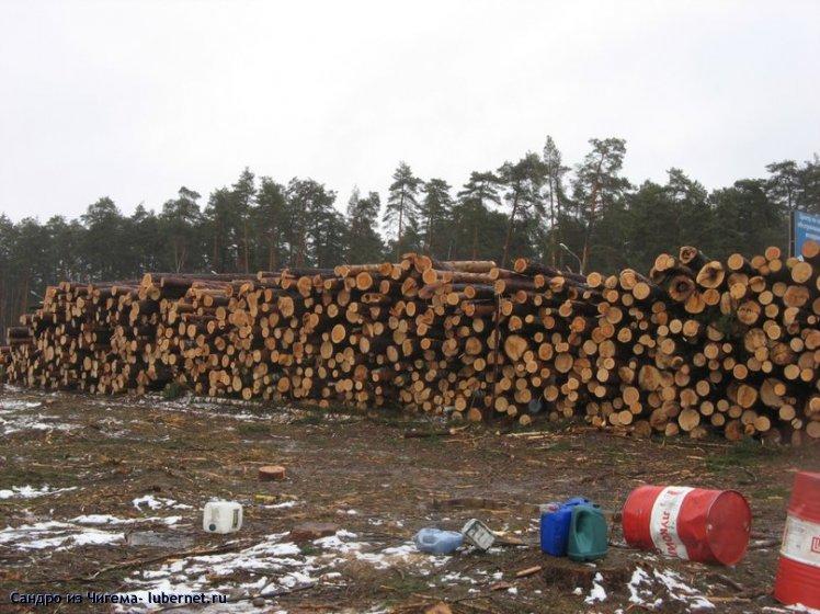 Фотография: Лес-наше богатство - или все что осталось от 12 Га Жуковского леса.jpg, пользователя: В@cильичЪ