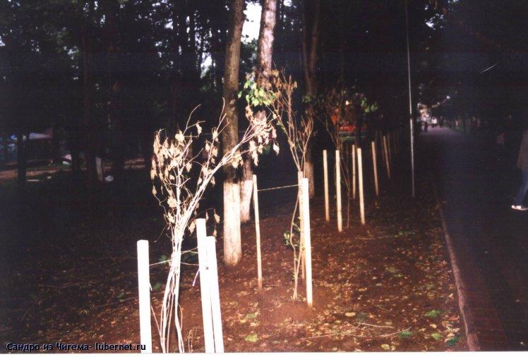 Фотография: Засохшие саженцы сирени в Наташинском парке.jpg, пользователя: Сандро из Чигема
