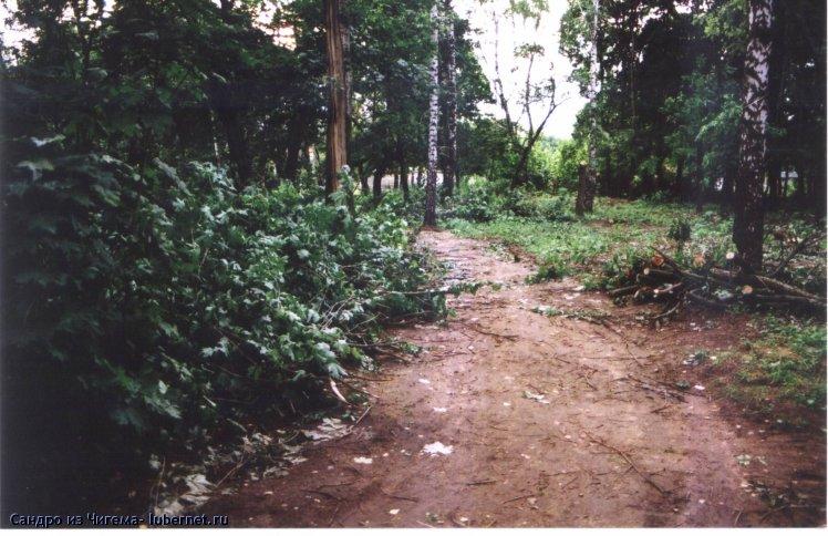 Фотография: Залежи срубленного подлеска в Наташинском парке.jpg, пользователя: Сандро из Чигема