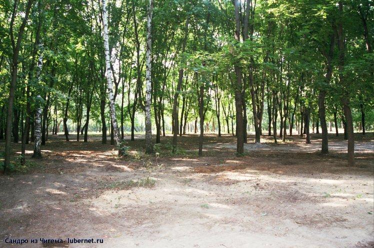 Фотография: Вид парка после вырубки подлеска.jpg, пользователя: Сандро из Чигема