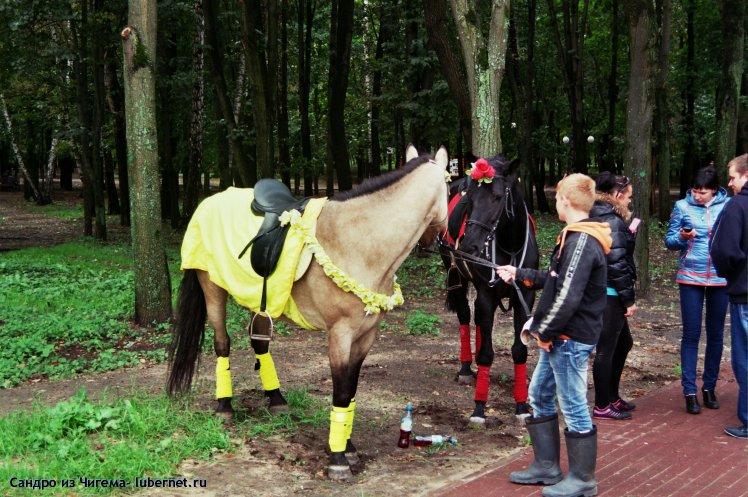 Фотография: Лошади в праздничном убранстве.jpg, пользователя: Иван Васильевич