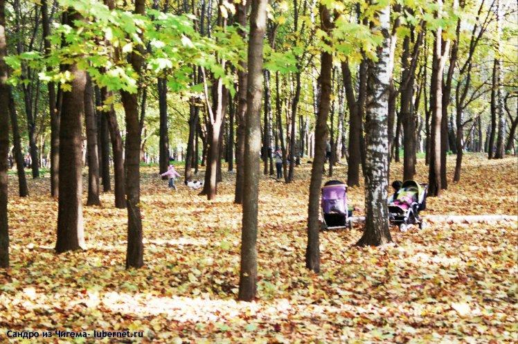 Фотография: Листопад в Наташинском парке.jpg, пользователя: В@cильичЪ