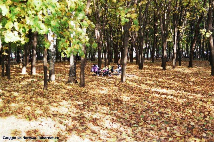 Фотография: Золото листвы.jpg, пользователя: В@cильичЪ
