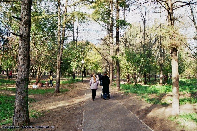 Фотография: Участок парка с хвойными деревьями (сосны и лиственницы)  .jpg, пользователя: В@cильичЪ