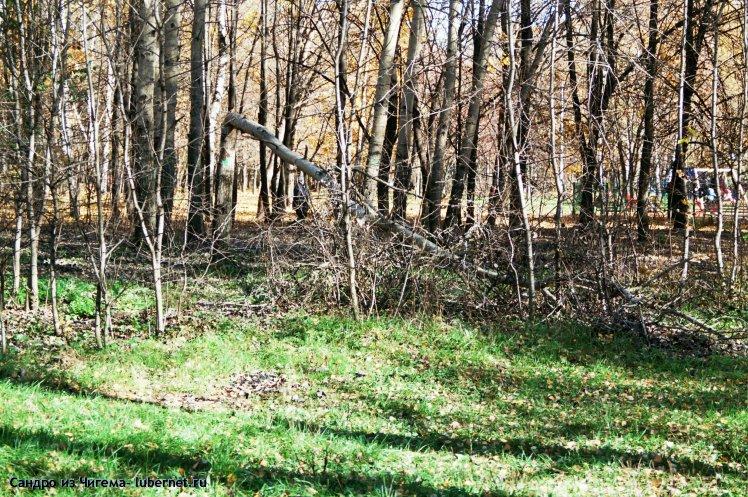 Фотография: Аварийное дерево (от 13.10.13г.). Сколько оно еще простоит в парке .jpg, пользователя: В@cильичЪ