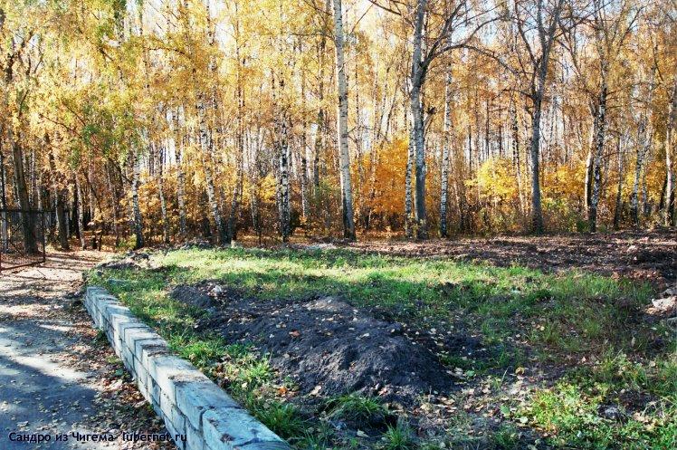 Фотография: На месте этих берез планируется строительство ФОКа.jpg, пользователя: В@cильичЪ