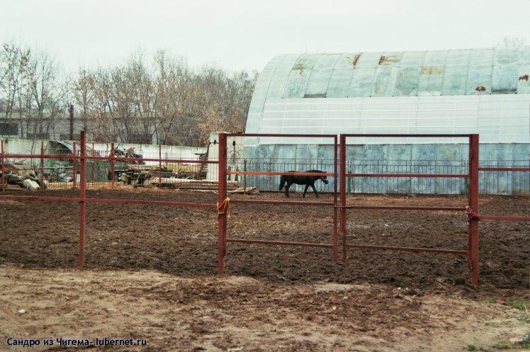 Фотография: Внутренняя площадка для лошадей.jpg, пользователя: В@cильичЪ