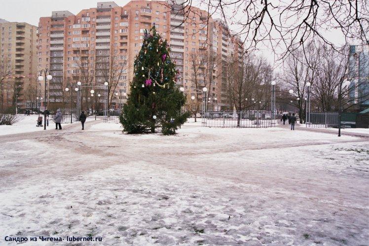 Фотография: Рождественская ель в парке Наташинские пруды.jpg, пользователя: В@cильичЪ