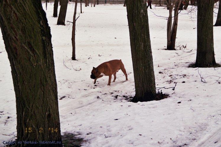 Фотография: В отсутствии собачьей площадки, весь Наташинский парк как большая собачья площадка.jpg, пользователя: В@cильичЪ