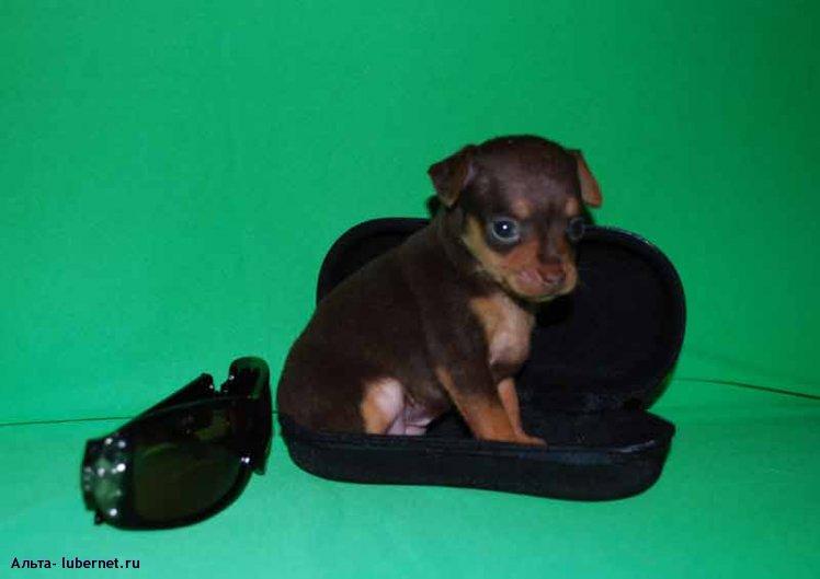 Фотография: Puppy.jpg, пользователя: Альта