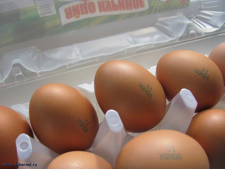 Фотография: Хохол яйца), пользователя: tabbi