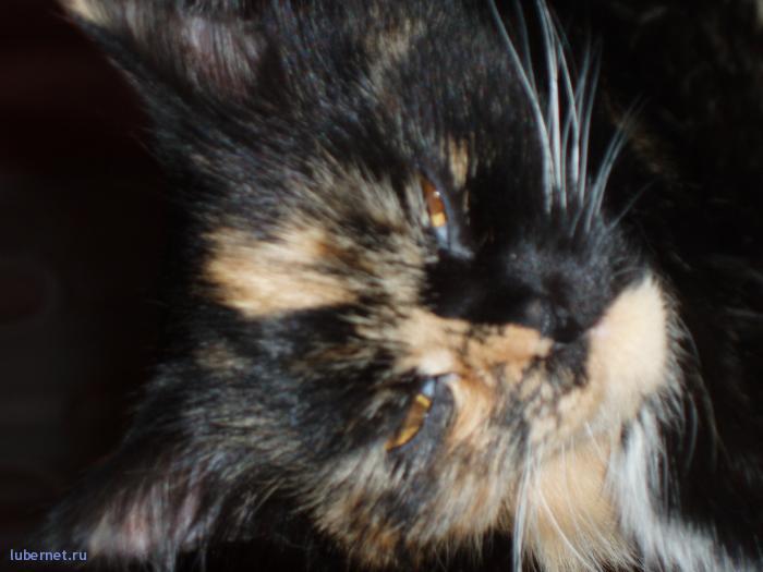 """Фотография: наша кошка """"Рыжая"""" (или по-другому Клякса =) ), пользователя: Arionovna"""