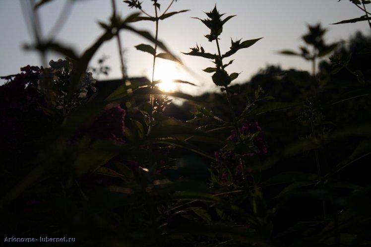 Фотография: , пользователя: Arionovna