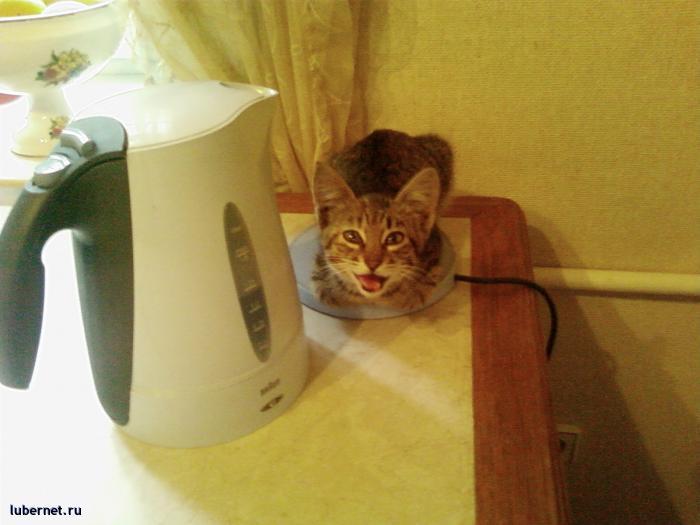 Фотография: Кошка1, пользователя: Arionovna