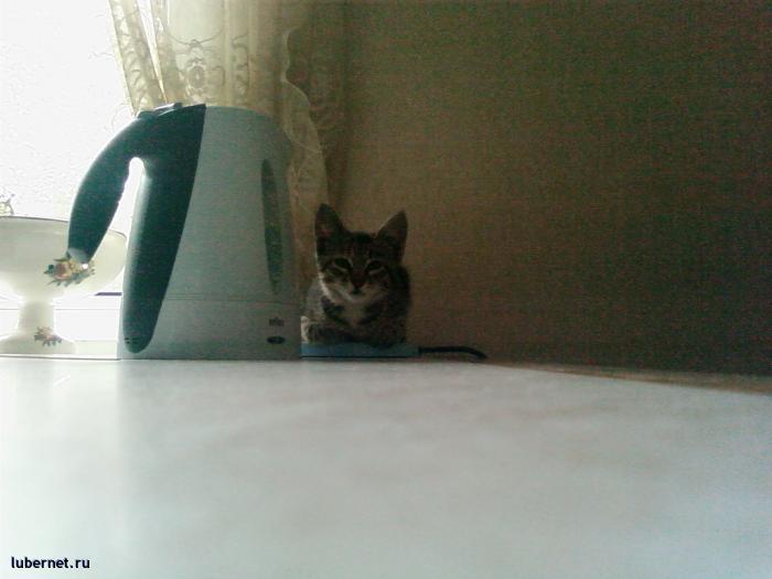 Фотография: Кошка2, пользователя: Arionovna