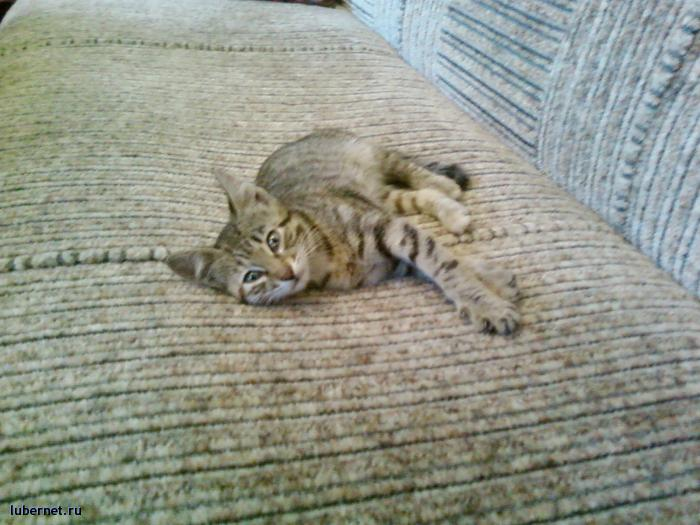 Фотография: Кошка3, пользователя: Arionovna