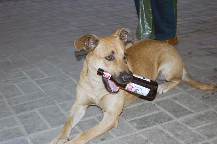 Фотография: Собака,которую все знали, пользователя: Евгений_1468