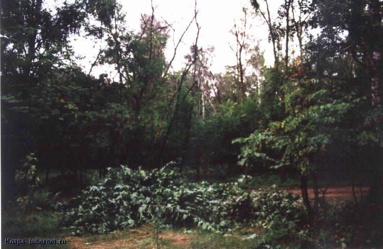 Фотография: Высохшие деревья на месте вырубленного подлеска.jpg, пользователя: Клара