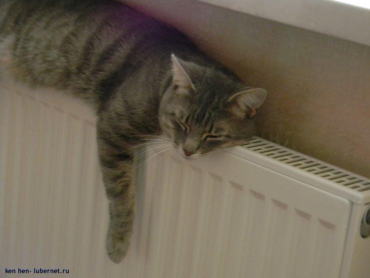 Фотография: ну ведь тепло, братцы!!!, пользователя: ken hen