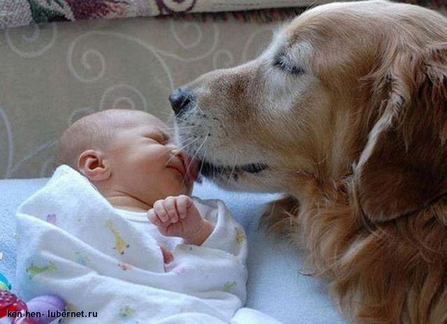 Фотография: сын и пес.jpg, пользователя: ken hen