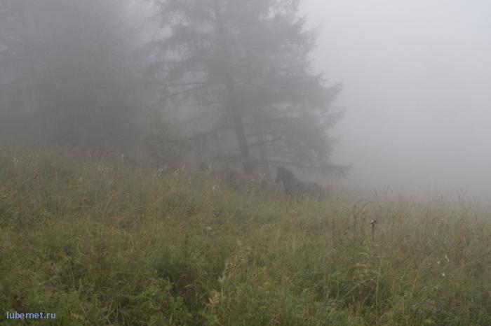 Фотография: Лошадь в тумане, пользователя: Arthur I.