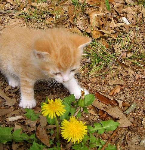 Фотография: котенок, пользователя: Arthur I.