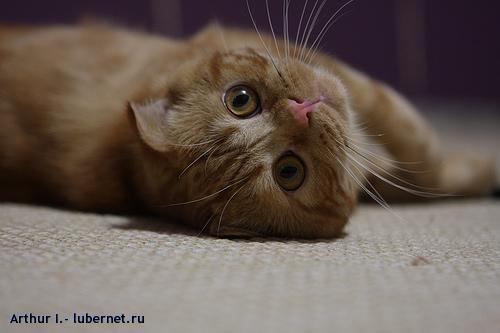 Фотография: Кошак мой, пользователя: Arthur I.