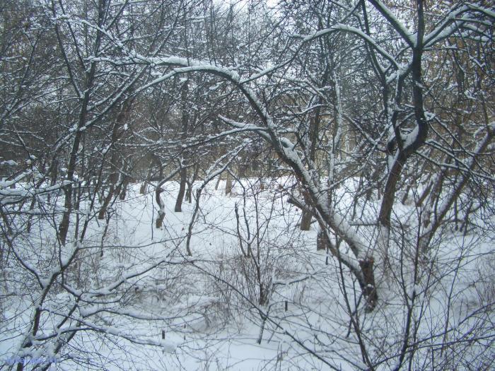 Фотография: Вид из моего окна, пользователя: He_Фёдор