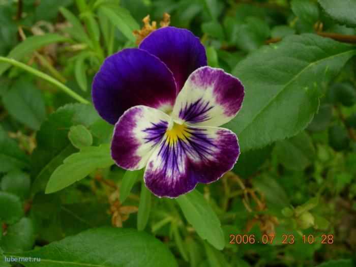 Фотография: цветочек, пользователя: lexa__007
