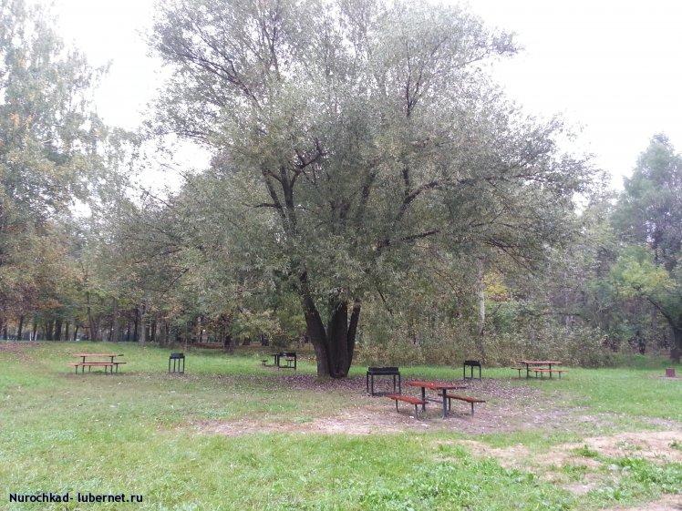 Фотография: Площадка для мангалов (ива).jpg, пользователя: Nurochkad