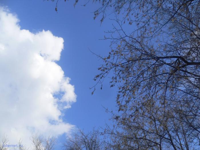 Фотография: небо над парком)), пользователя: ПрИчУдА