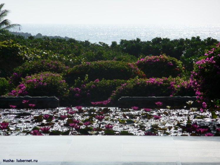 Фотография: P1000180.JPG, пользователя: Nusha