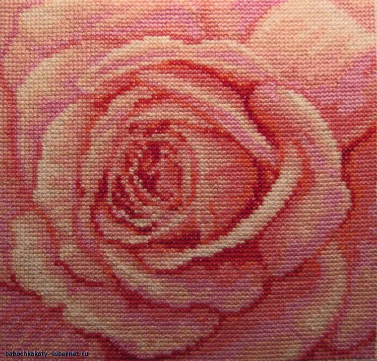 Фотография: розовая роза.jpg, пользователя: babochkakaty