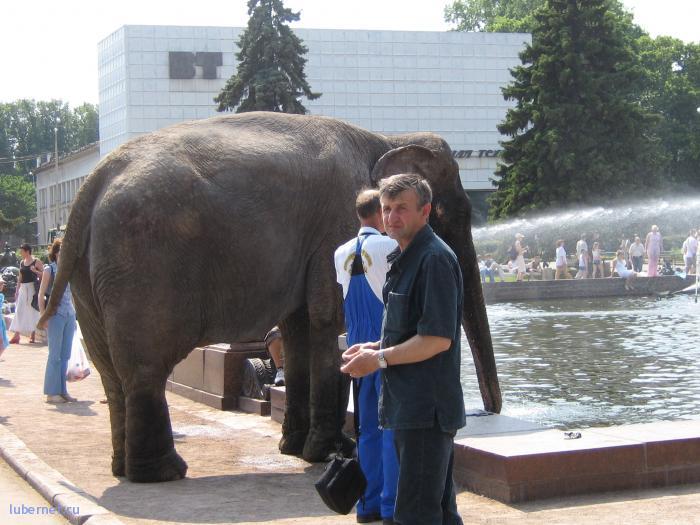 Фотография: слоник, пользователя: Maks_FAIT