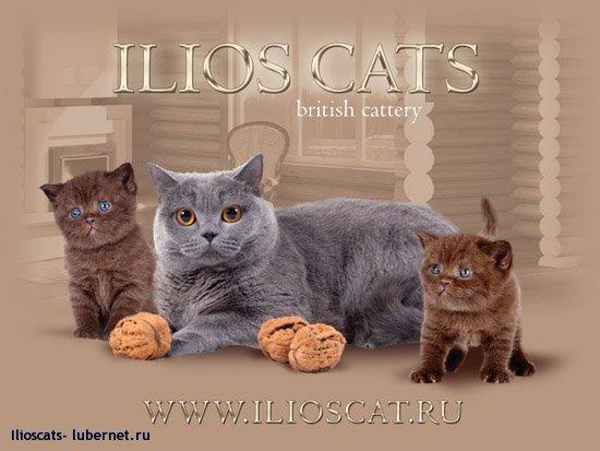 Фотография: kalend.jpg, пользователя: Ilioscat.ru