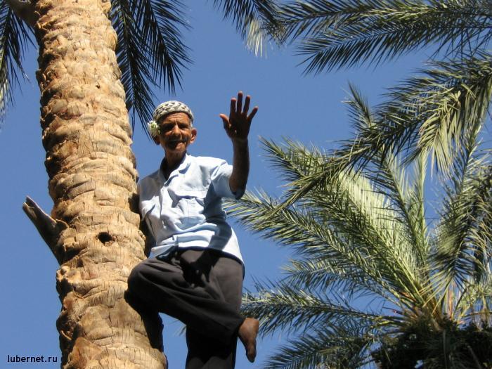 Фотография: Спец по пальме, пользователя: Авиатор