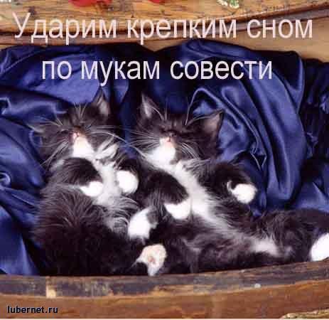 Фотография: крепким сном по мукам совести!, пользователя: ЮЖная